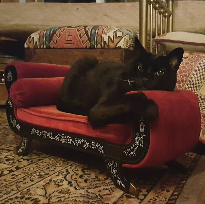 Have said it once and i'll say it again... pet furniture is everything.