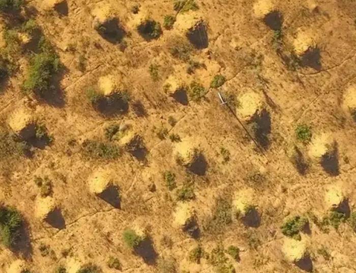 #18 Tough Termites