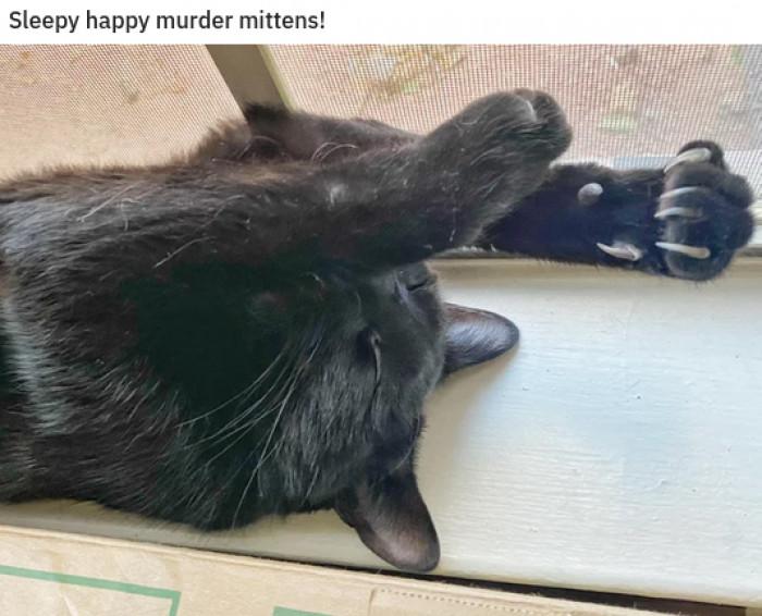 4. Big Happy Kitty Vibes