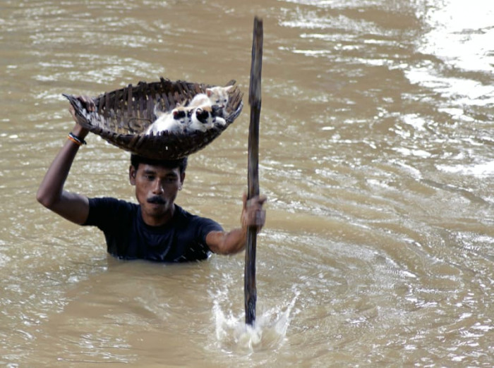 Man helps stray kittens during a flood in Cuttack, India