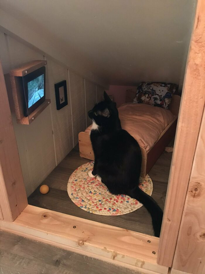 Wyatt normally enjoys watching random animals from the window, so a tiny TV is a good enough alternative considering the cold season