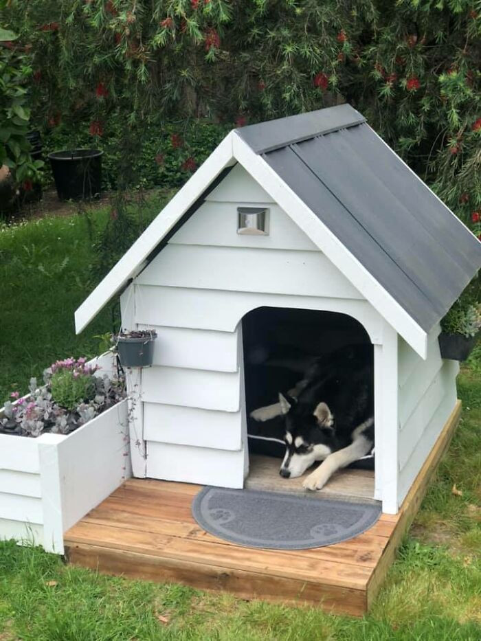 #9 The sweetest dog house.