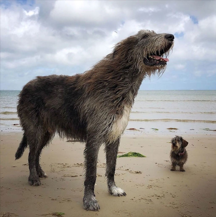 2. Tiny Doggo and Giant Doggo hanging out at the beach