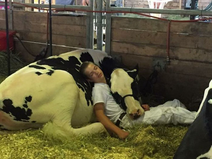 26. Showing for 4-H is exhausting!