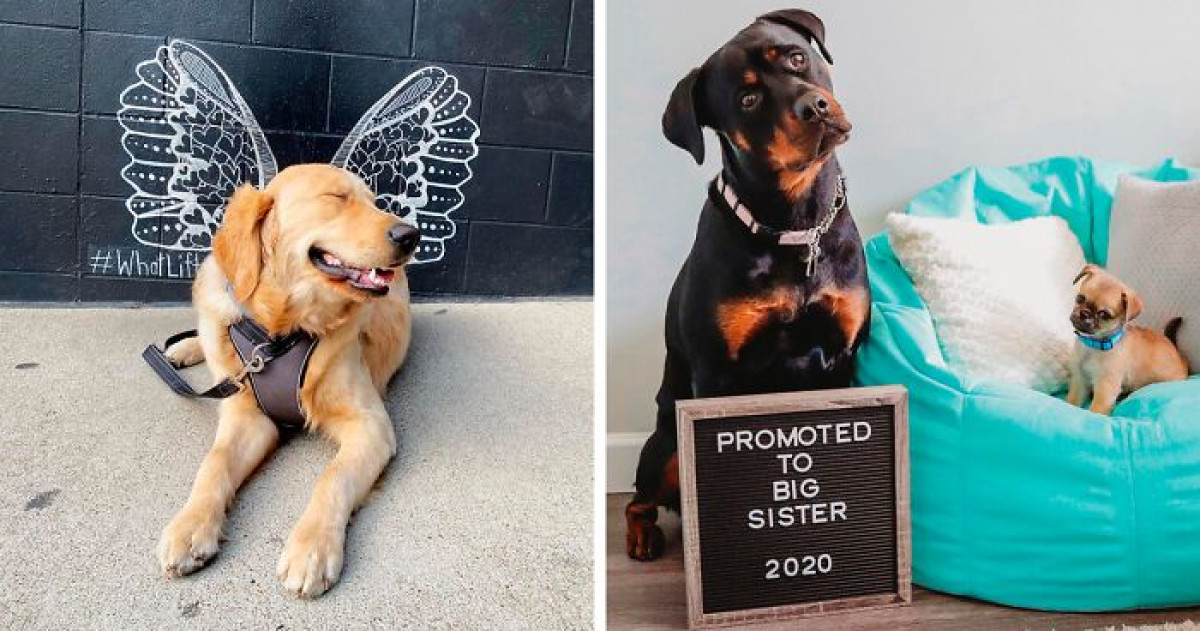 People Are Sharing The Most Stunning Pics Of Their Dogs For The #ModelChallenge On Facebook, And It's The Best Thing You'll See Today