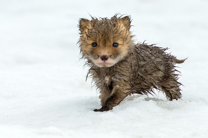 This little guy is all wet.