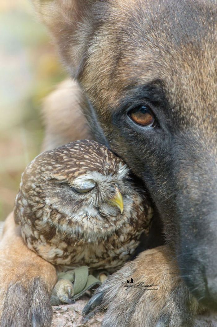 26. Ingo The Dog And His Owl Friend