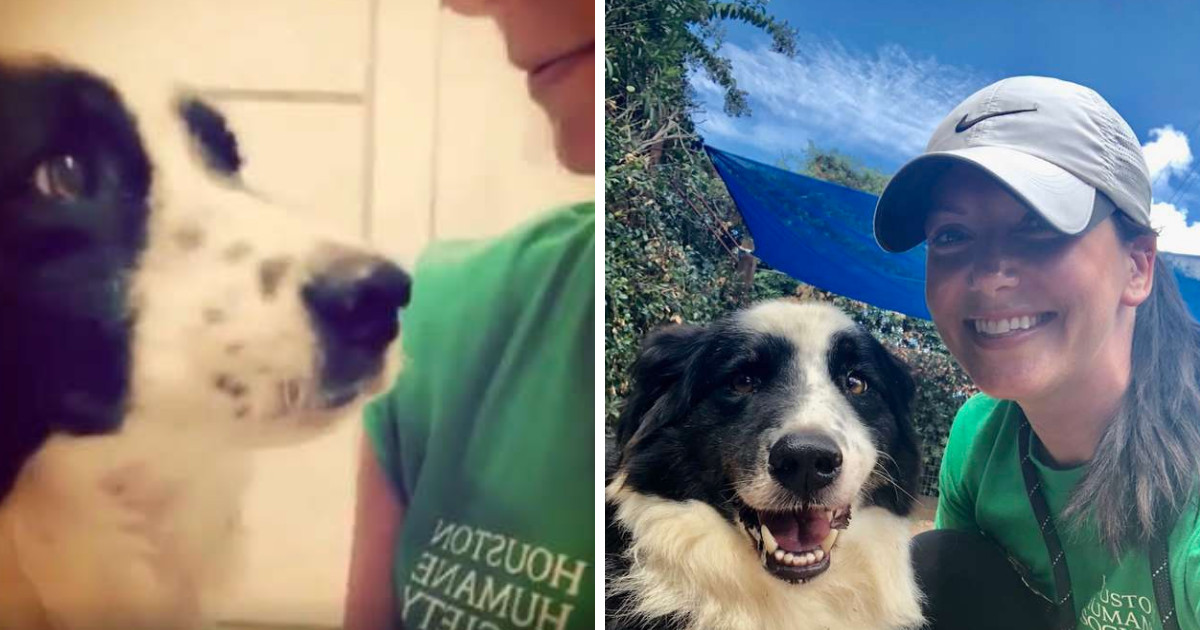 This Doggo Was Dropped At A Shelter And Is So Heartbroken That His Family Doesn't Want Him Anymore