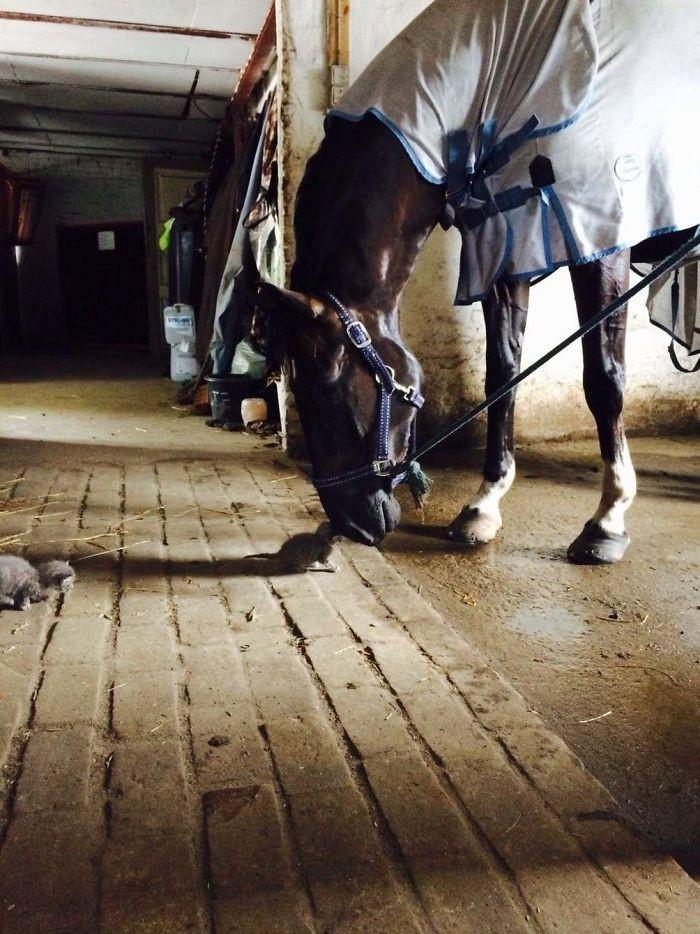 39. My Girlfriends Horse Got A New Friend