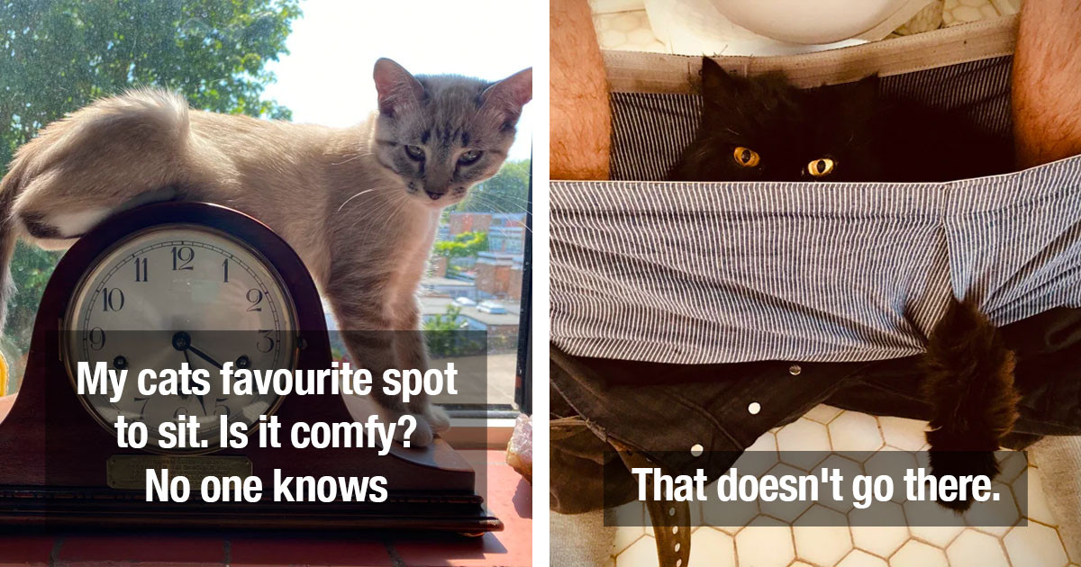 Proof That Cats Continue To Be Hilarious Every Single Day