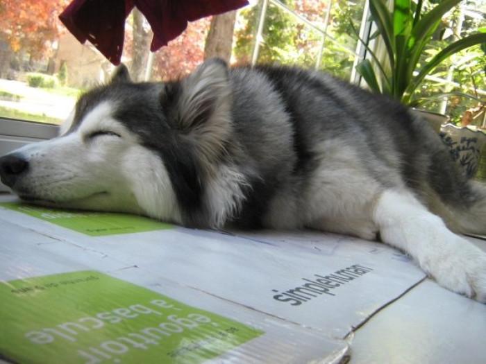 Sunbathing cat style