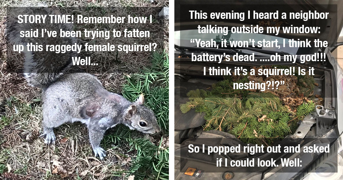 Woman Found A Nest With Cute Baby Squirrels Under The Hood Of Her Neighbor's Car