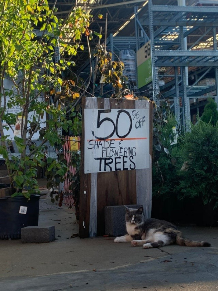 5. Tom is taking advantage of his new job at Home Depot