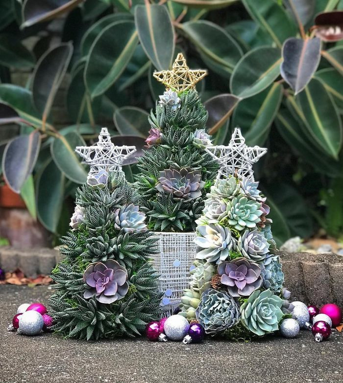 Amanda Ryan runs the Etsy shop TerracottaCornerFL, which is one of the most popular places online right now to get a Succulent Christmas tree.