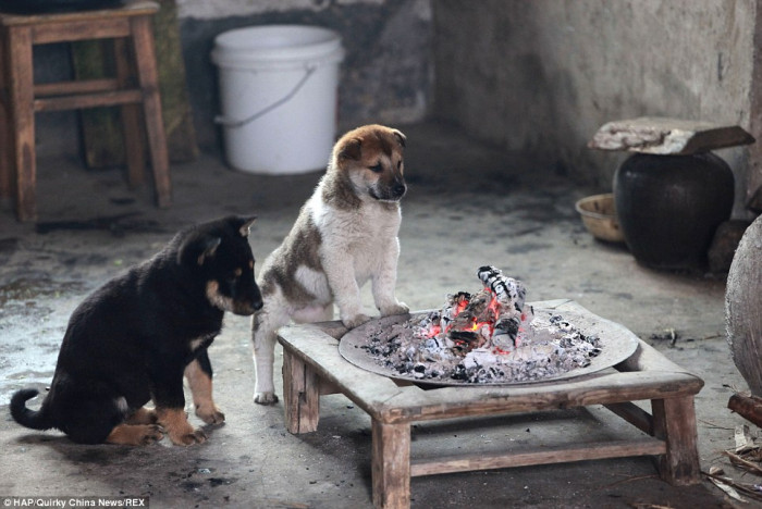 One dog stepped back a little as he felt too much heat
