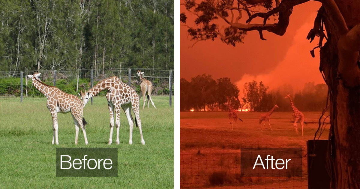 19 Before And After Pictures That Show How Much Devastation The Bushfires In Australia Are Causing
