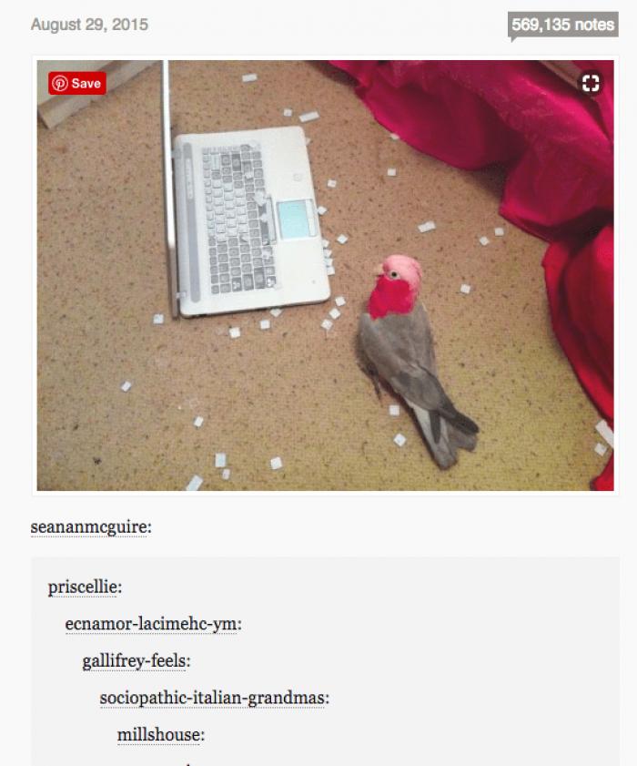 1. Those Australian birds are evil…