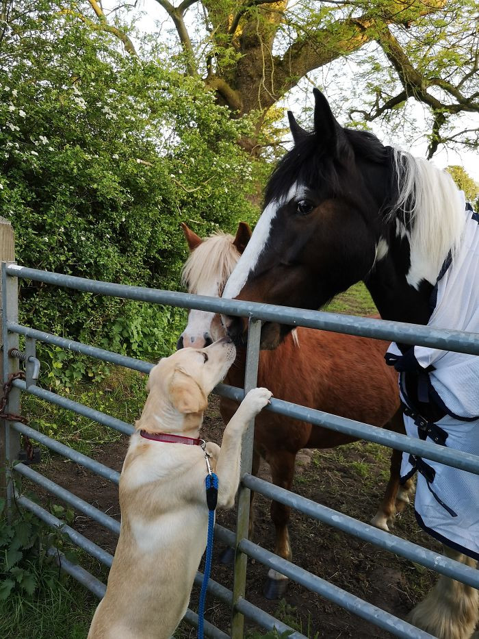 11. These Horses Always Come For A Kiss Whenever We Walk Past