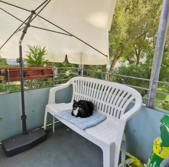 """""""I opened the door to the balcony, placed my cushion on the bench, went inside to grab my book, and this is what I saw when I went back outside."""""""