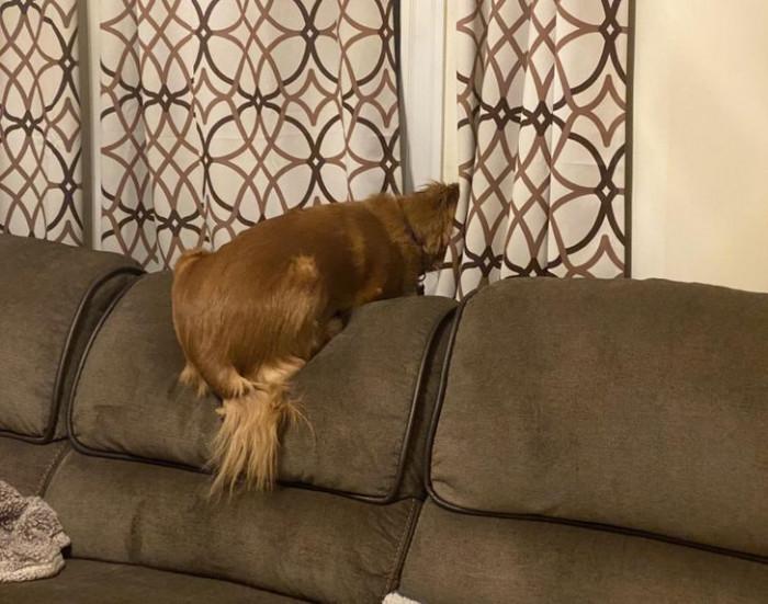"2. ""Meet Cedar, he sometimes thinks he's a bird or a cat while he watches the neighborhood."""