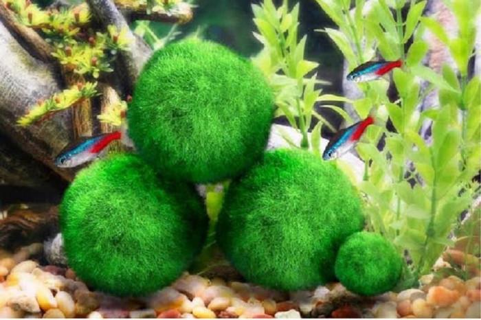 27. Aquarium Moss Balls