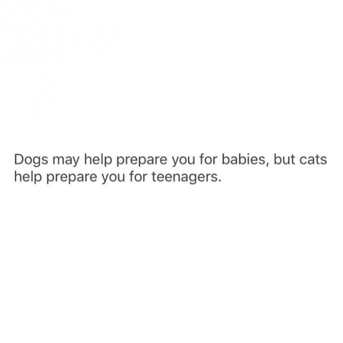 7. Thank goodness for cats.