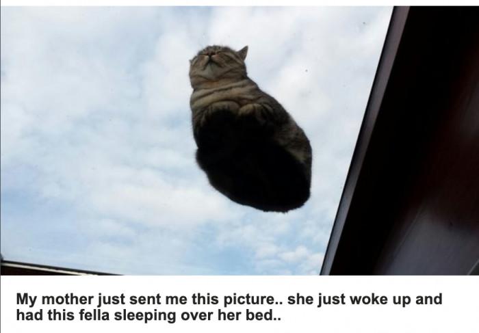 Hover-craft cat..