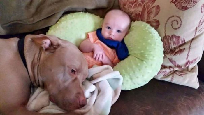 Tiny baby and adorable pitty