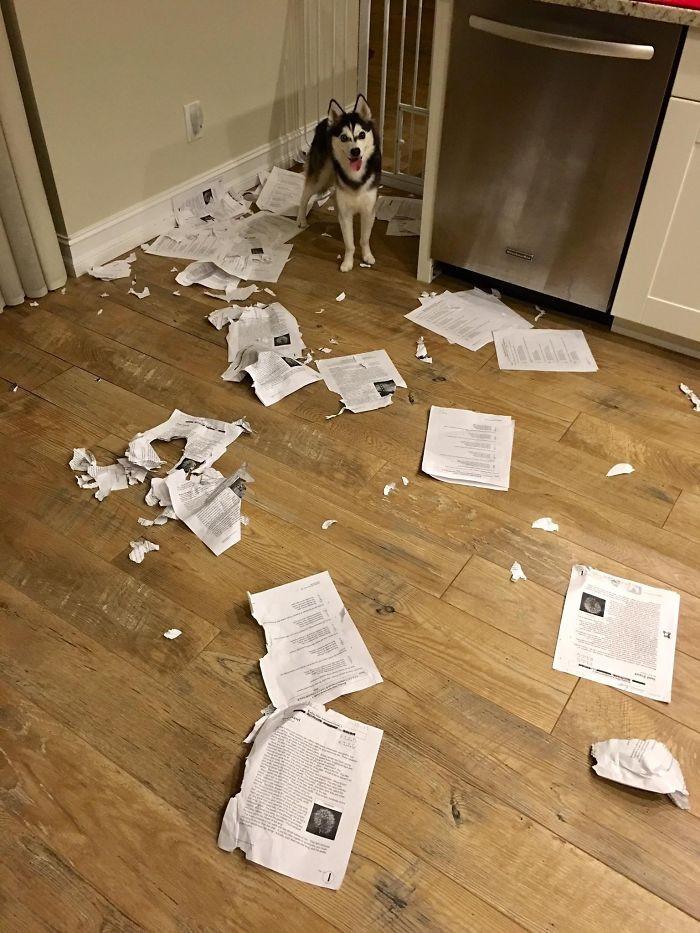 Teacher's dog ate the homework...