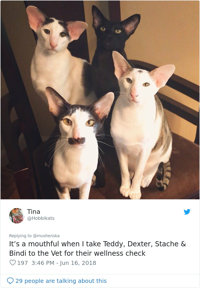 All I can think is they look like that actor, Adam Driver. Google it!
