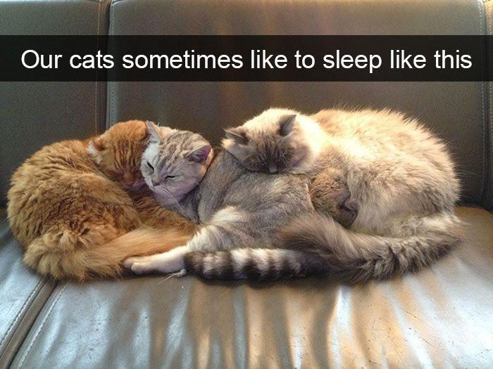 77. Cat Pile