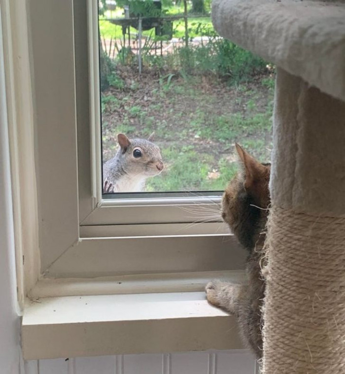 """13. """"I heard my cat's body slam into the window and discovered a curious visitor."""""""