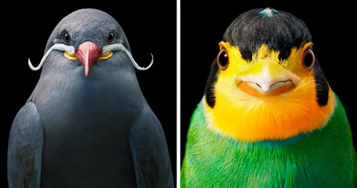 25 Striking Portraits Of Rare And Endangered Birds