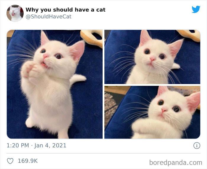 25. Cats have big, beautiful eyes.