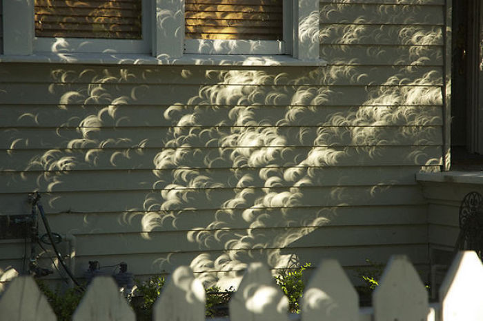 #7 Leaves From A Tree During A Solar Eclipse