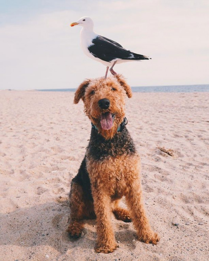 Seagulls are not famous for attacking people's dogs, although they are quite larger than they may appear.