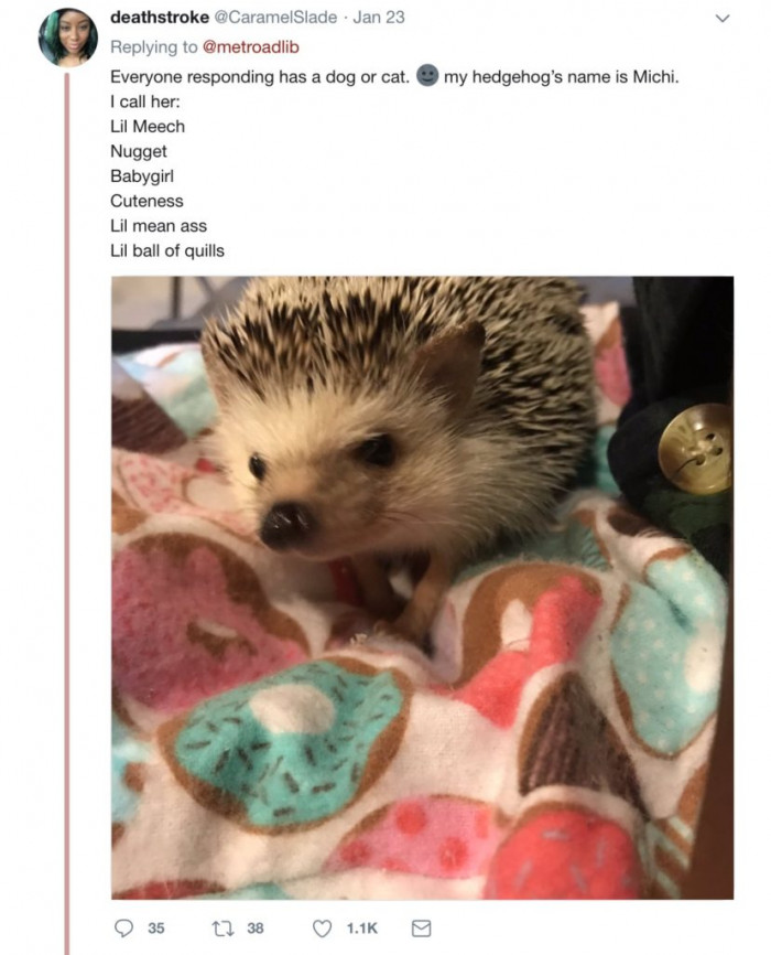 A hedgehog named Michi