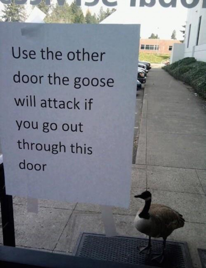 Watch Out For The Goose