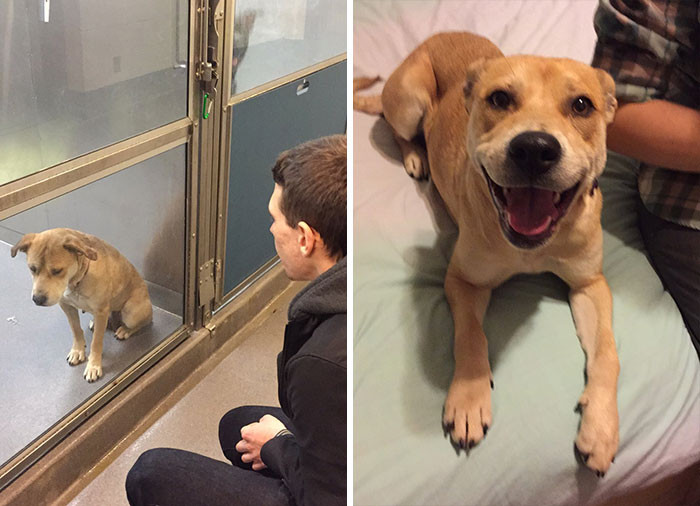 #3 The difference a single day can make. Remember your life can change in 1 day. Meet Spokey.