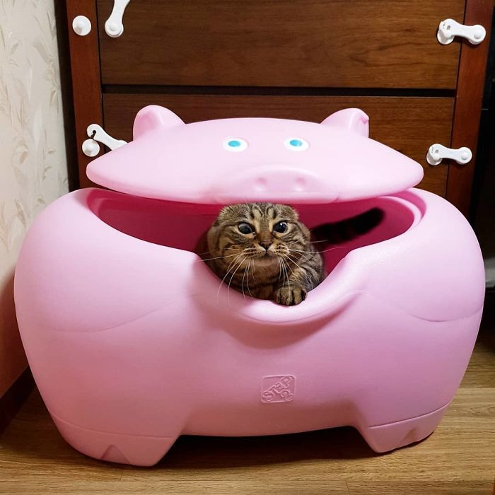 #21 Help, I Has Been Eaten By A Pig