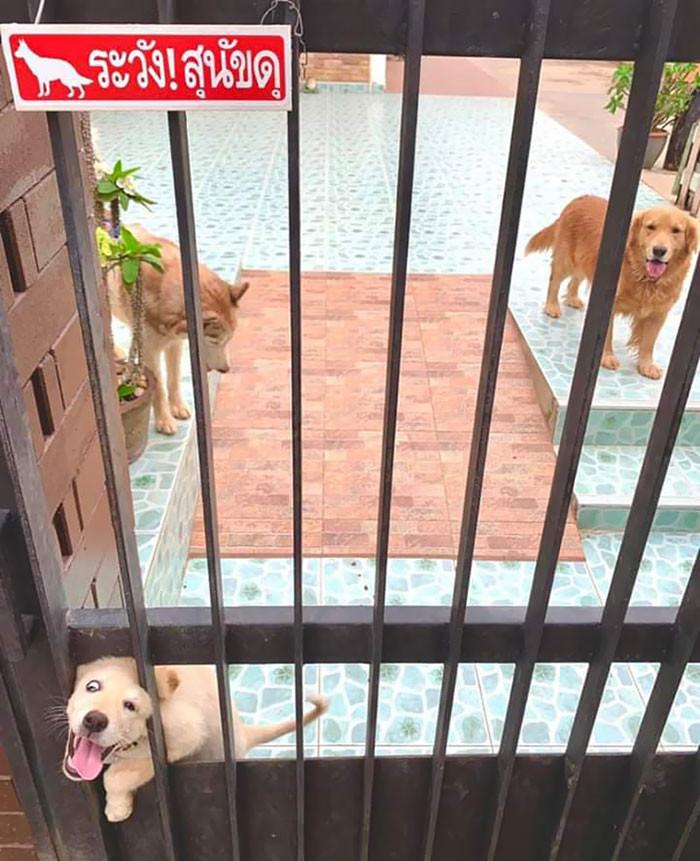# 1 Beware do cão