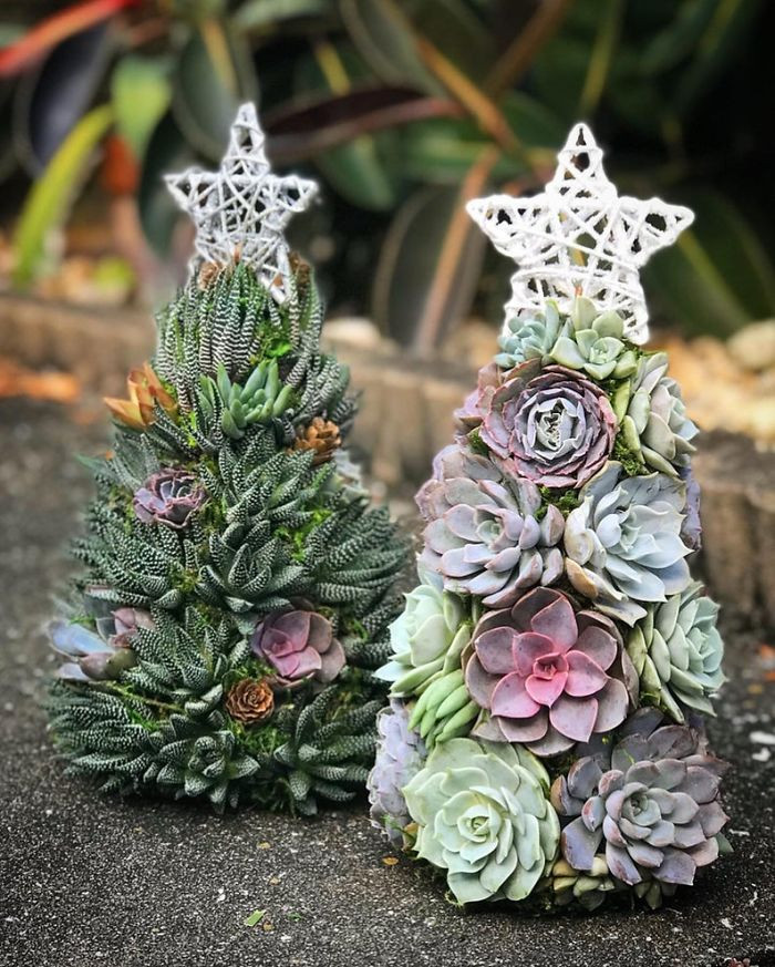 The Succulents cost around $130 and Amanda's shop has been open on Etsy since 2010, selling to over 3,000 satisfied customers.
