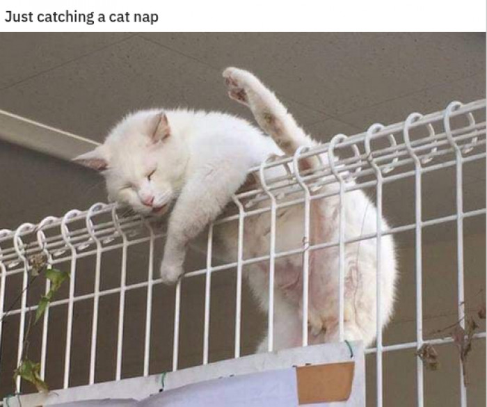 10. Cats defying physics as usual.