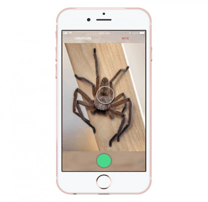 Through users photographs, AI in Critterpedia app identifies Australian spiders and snakes.