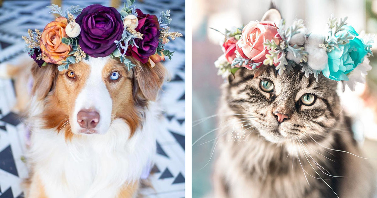 Artist Creates Floral Crowns For Pets And They Are Utterly Stunning
