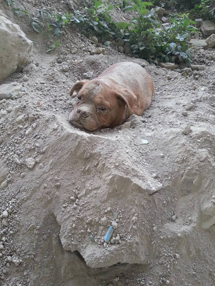 Athena was found buried alive on August 4. Her head was the only exposed part, and it appears that she managed to free it herself because she was buried pretty shallow.