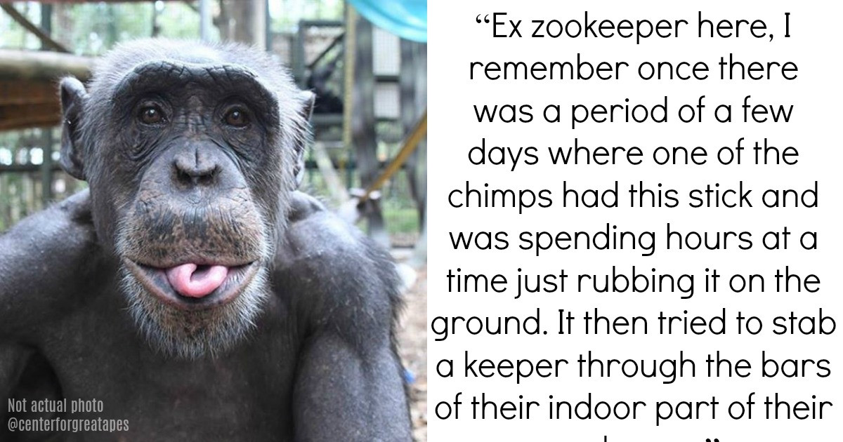 Zookeepers Reveal The Absolute Weirdest Things They Have Seen Animals Do