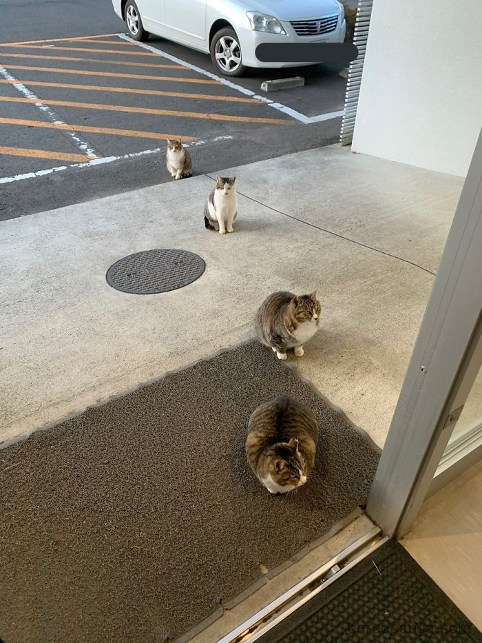 1. Even the cats in Japan are polite